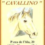 Cavallino Vernante